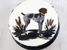 German Shorthair pointer top view